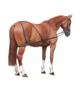 Patent do lonżowania koni