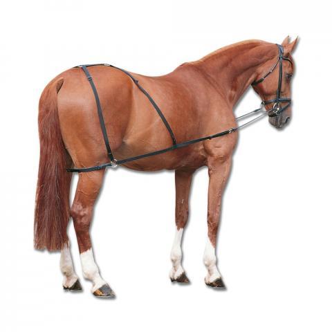 Patent do lonżowania koni Waldhausen
