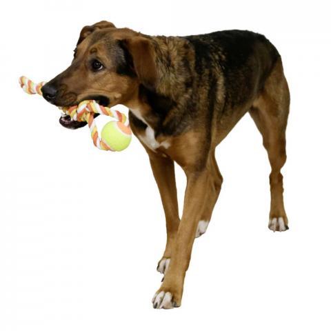Zabawka dla psa Kerbl piłka na linie kolorowa